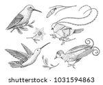 Small Hummingbird. Rufous And...