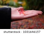 nature outdoor autumnal fall... | Shutterstock . vector #1031646157