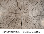 background texture of a tree... | Shutterstock . vector #1031722357