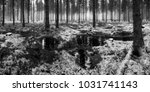 winter forest scene | Shutterstock . vector #1031741143
