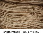 layer of local cotton north... | Shutterstock . vector #1031741257