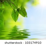 green leaves and reflection in water, selective focus - stock photo