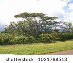 hawaiian landscapes  kauai ...   Shutterstock . vector #1031788513
