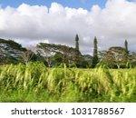 hawaiian landscapes  kauai ...   Shutterstock . vector #1031788567