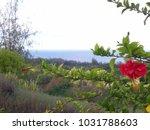 hawaiian landscapes  kauai ...   Shutterstock . vector #1031788603