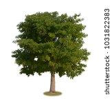 a real tree  devil tree ... | Shutterstock . vector #1031822383