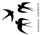 black and white swallow... | Shutterstock .eps vector #1031981173