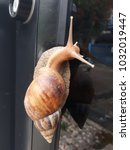 the snail was hanging at the... | Shutterstock . vector #1032019447