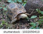 turtle in nature thailand | Shutterstock . vector #1032050413