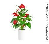 decorative calls flower planted ... | Shutterstock . vector #1032118837