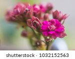 colorful small flowers of... | Shutterstock . vector #1032152563