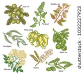 medical and cosmetics plants.... | Shutterstock .eps vector #1032227923