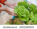 hydroponics vegetable farming... | Shutterstock . vector #1032283033