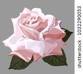 beautiful rose close up.... | Shutterstock .eps vector #1032290053