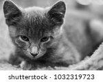 young grey feline | Shutterstock . vector #1032319723