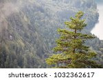 foggy forest close to... | Shutterstock . vector #1032362617