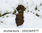 a trail of roe deer  it's also... | Shutterstock . vector #1032369577