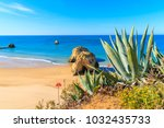green agave plants on cliff and ...   Shutterstock . vector #1032435733