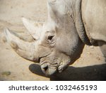 approach to face of white rhino | Shutterstock . vector #1032465193