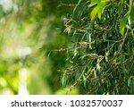 a closeup of eucalyptus seed... | Shutterstock . vector #1032570037