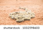 a group of processionary... | Shutterstock . vector #1032598603
