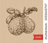 bergamot illustration. engraved ... | Shutterstock .eps vector #1032610747