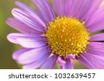 macro texture of vibrant purple ...   Shutterstock . vector #1032639457