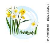 decorative flower narcissus for ... | Shutterstock .eps vector #1032666877