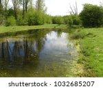 A Natural Blue Amphibian Pool...