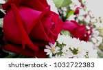 close up of red rose flower   Shutterstock . vector #1032722383