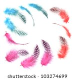 Different angles of the guinea fowl feathers collection,Three kinds red and Purple and blue,Isolated on the white background - stock photo
