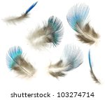 Precious and rare peacock blue feather collection of different angle,Isolated on the white background - stock photo