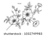 rose flower drawing ... | Shutterstock .eps vector #1032749983