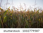 having a view at a field on a... | Shutterstock . vector #1032779587