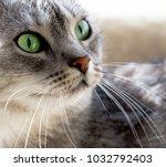Portrait Of Beautiful Gray Cat...
