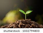 seedlings are growing from...   Shutterstock . vector #1032794803