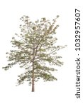 tree isolated on white... | Shutterstock . vector #1032957607