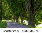 Path Under The Trees Of Longes...