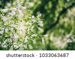 spring background of branches... | Shutterstock . vector #1033063687