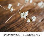 branch of blossom on wooden... | Shutterstock . vector #1033063717