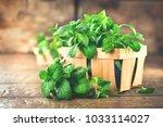 mint. bunch of fresh green... | Shutterstock . vector #1033114027