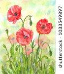 red watercolor poppies ...   Shutterstock . vector #1033549897