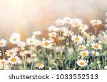 field chamomiles flowers... | Shutterstock . vector #1033552513