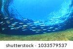 Sardines Fish And Mackerel...