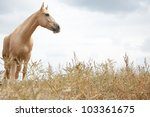 Horse outdoors standing in the field - stock photo