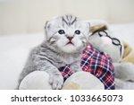 Stock photo cute kitten with a toy plush tabby kitten the kitten plays 1033665073