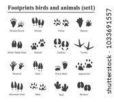 Wildlife Animals And Birds...