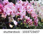 pink orchid big pink orchid... | Shutterstock . vector #1033723657