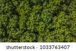 aerial view rubber tree forest  ... | Shutterstock . vector #1033763407