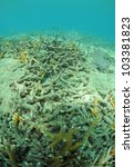 Dead coral in Atlantic Ocean due to pollution and global warming - stock photo